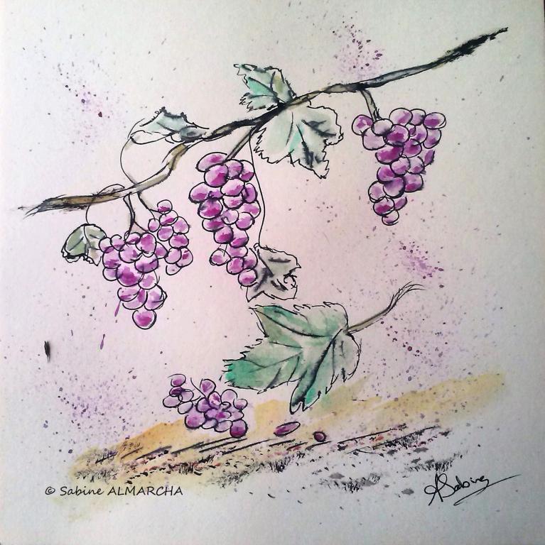 Le raisin. 1