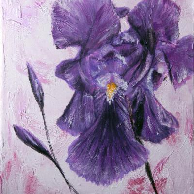 'l'iris'