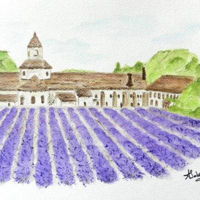 Provence abbaye de senanque