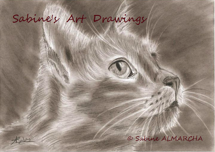Le chat - sabine's art drawings